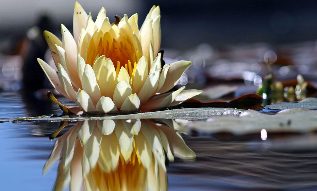 flower reflection mindfulness melbourne hypnotherapy hypnosis reduce stress anxiety lose weight