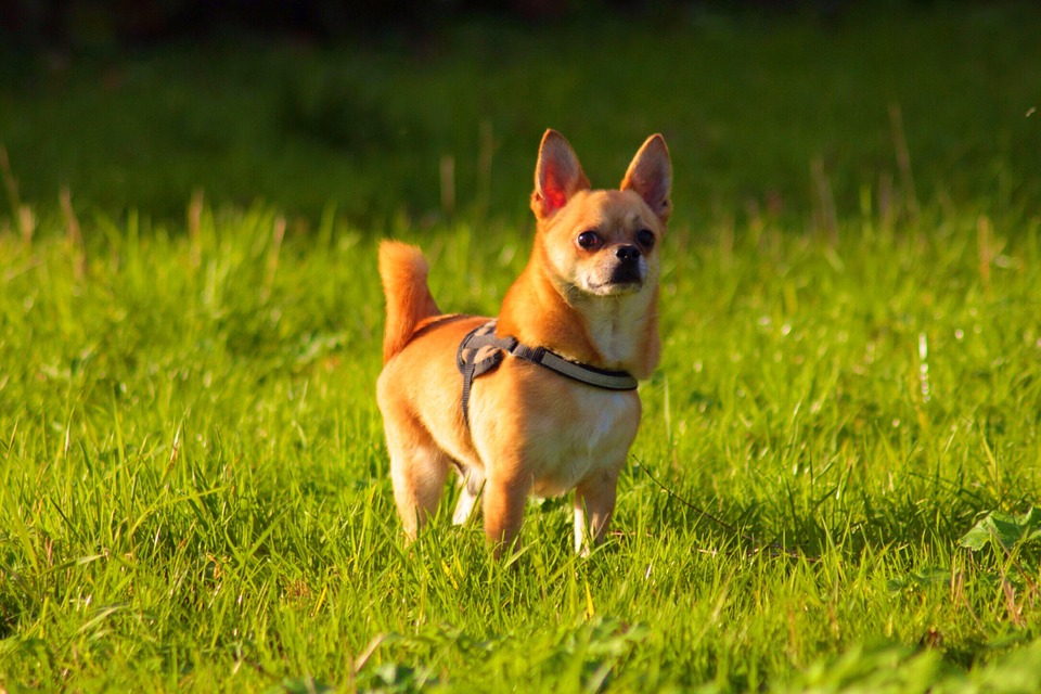What Do Dogs In a Park Teach Us About Our Emotions?