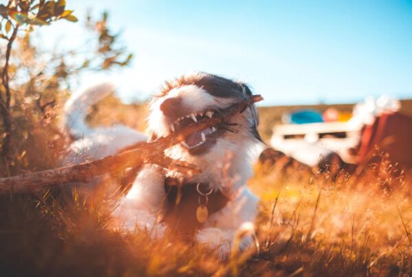 Dog Trauma Phobia Fear PTSD Release Hypnosis Melbourne Hynotherapy Counselling Online